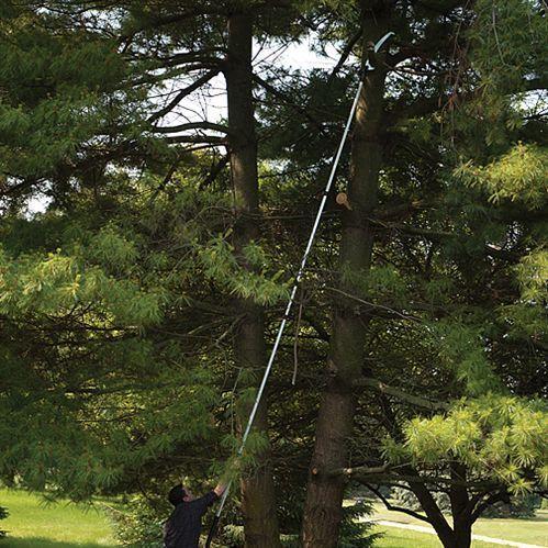Hoge Bomen Snoeien Deel 2 1